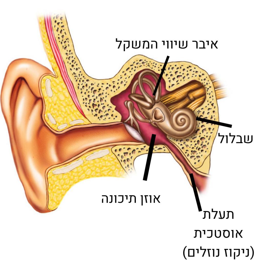 נוזלים באוזניים טיפול טבעי